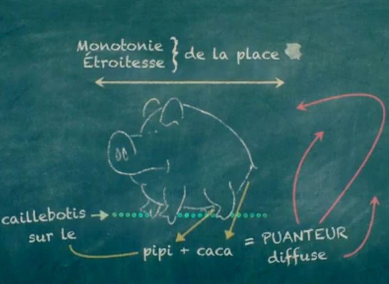 Rigal cochon caillebotis2