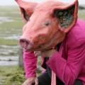 plage cochon Erwan recadré