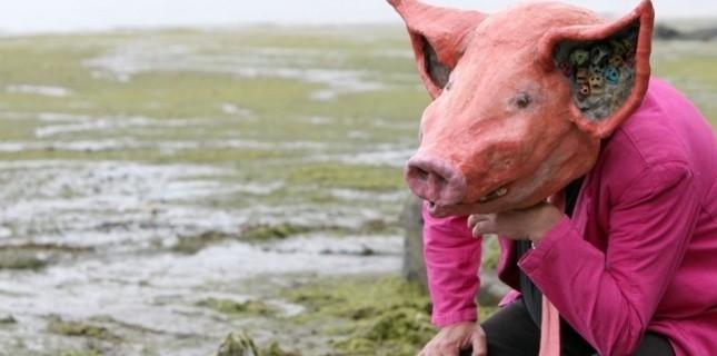 plage cochon Erwan